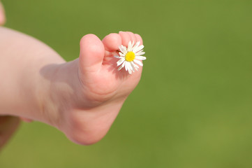 Babyfoot with daisy_ outdoor