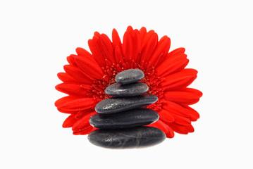 red flower black stones
