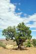Tree alone in desert