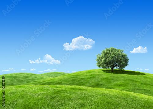 Bardzo szczegółowe drzewo 7000px na szablonie lea - kolekcja przyrody