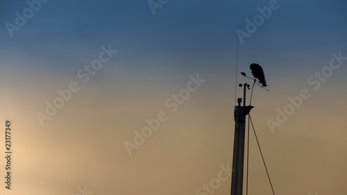 Crow on a yacth pole. HD 1080p.