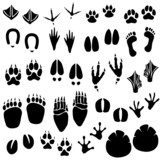 Fototapety Animal Footprint Track Vector