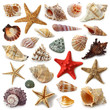 Leinwanddruck Bild - Seashell collection isolated on white background