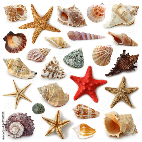 Seashell collection isolated on white background - 23183762