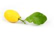 limone biologico con foglia