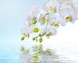 Fototapeta kwiat - elegancki - Kwiat