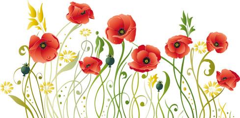 Mohn, Mohnblumen, Blumen, floral, filigran, Wiese