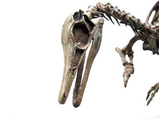 20100603_恐竜の化石
