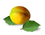 Ripe apricot with leaves on white background