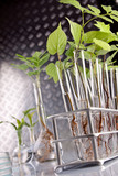 Seedlings in test tubes poster