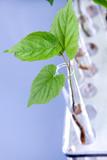 Seedling in test tubes poster