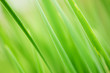 Green grass background