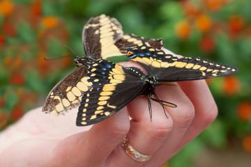 ragazza tiene le farfalle nella mano