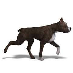 American Staffordshire Terrier Dog. 3D rendering with clipping p