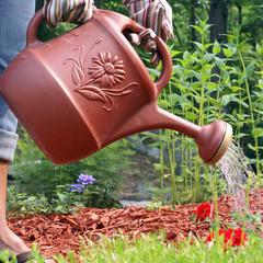 Gardener Waters Flowers