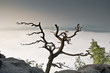 Sonnenaufgang mit Nebel in der Sächsischen Schweiz