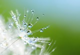 Fototapeta jasność - błyszczący - Kwiat