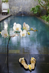 Branch of blooming orchid above slippers before pool