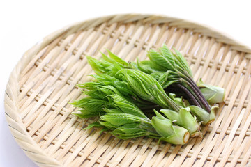 山菜のコシアブラ