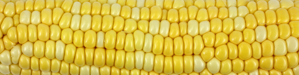 Close View Cob Corn