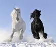 Leinwanddruck Bild - white and black horse