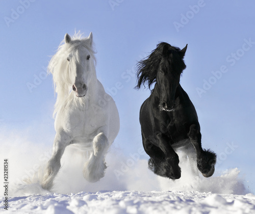 Foto op Canvas Paardensport white and black horse