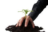 business hand grasping a young plant poster