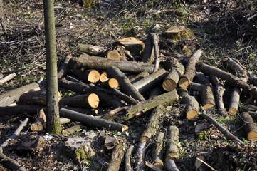 legna legnaia bosco tronco energia risorsa