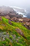 Atlantic coast in Newfoundland poster