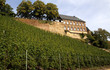 Weinberge in Saarburg
