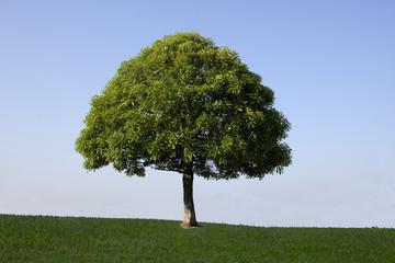 草原の青い空と一本の木