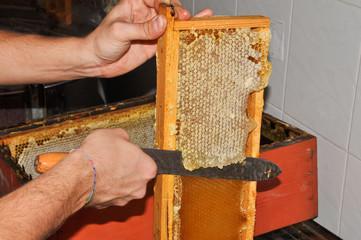 preparare telaio estrazione miele 2