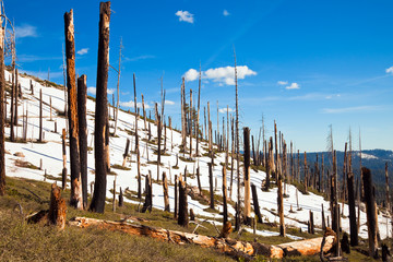 Dead Forest in Yosemite
