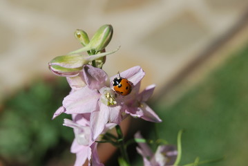 ladybug love flower