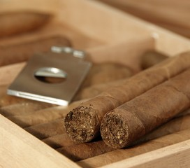 Cigars and cutter in open humidor