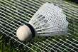 Badminton VI
