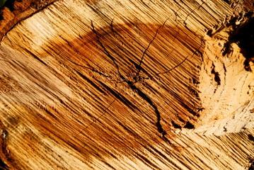 internal  face  of  sawn  timber