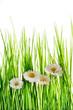 Fototapeten,blühen,eco,jahreszeit,sommer
