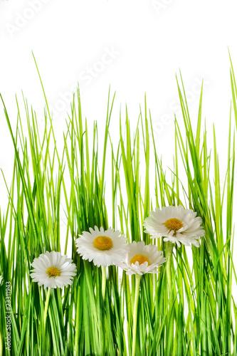 Fototapeten,blühen,blumenblatt,öko,jahreszeit