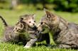 Katzenmutter mit Nachwuchs