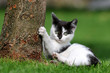 Katzenkind am Baum