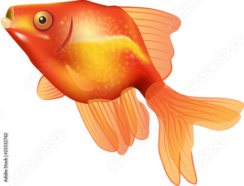 Goldfish vector illustration