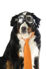 dog with orange tie and motorbike glasses