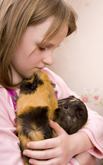 little girl and her guinea pigs