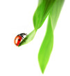 Ladybug, which sits on a green leaf
