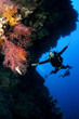 scuba diver on drift dive