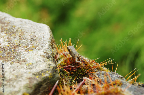 A little frog sitting on the moss-grown stone