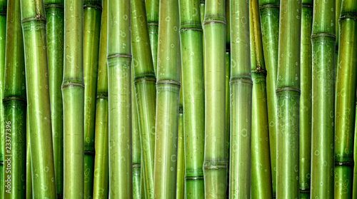 fresh bamboo background