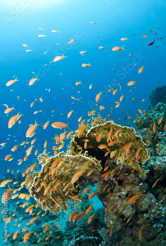 Tuinposter Koraalriffen coral reef with many fish