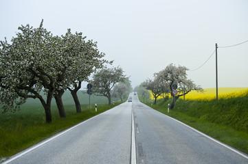 Landstrasse in Mecklenburg
